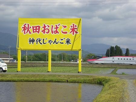 神代田んぼ情報(5/28)