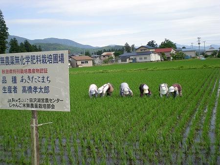 神代田んぼ情報(6/29)
