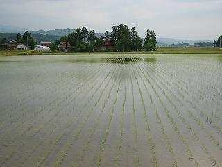 三和田んぼ情報(5/31)