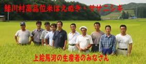 鮭川村ササニシキについて(7/24)