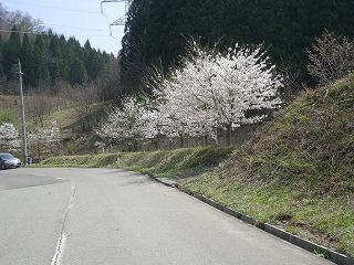 神代田んぼ情報(4/22)