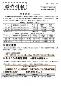 神代田んぼ情報(7/23)