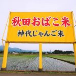 神代田んぼ情報(2019/05/16)