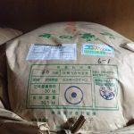特別栽培米・東ミルキークイーン入荷(2018/10/16)